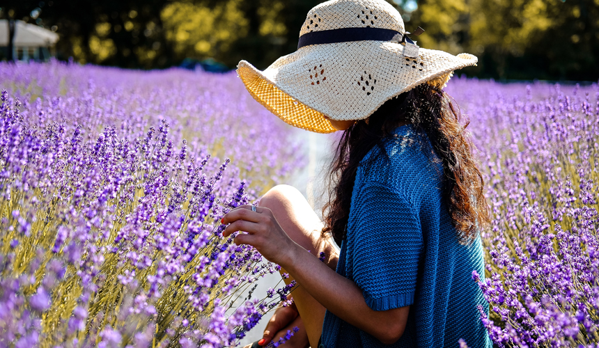 UNDER THE MICROSCOPE: LAVENDER