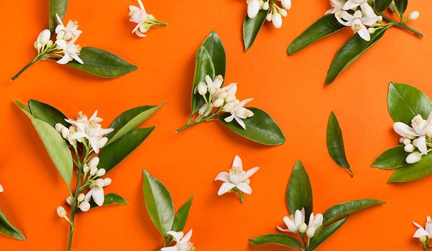 Mayan Vanilla & Orange Blossom Elasticizer Therapies